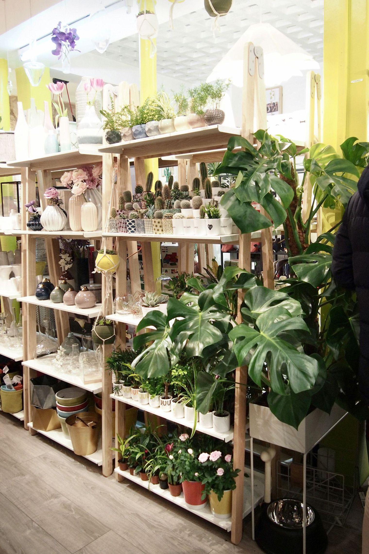 Le premier bar plantes une jungle urbaine dans paris for Acheter des plantes
