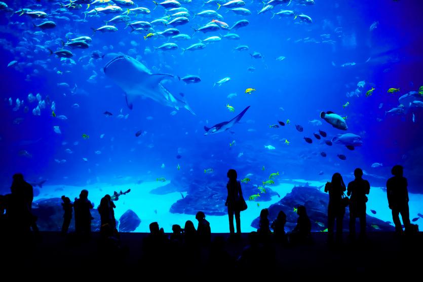 grand-aquarium-de-saint-malo-jpg2_-2